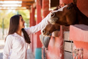 horse groom job equine science