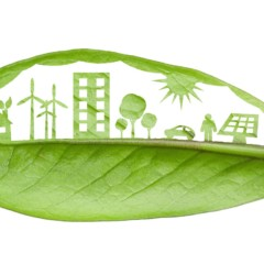 What Can You Do With An Environmental Studies Degree?