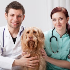 What Can You Do With A Vet Tech Degree?